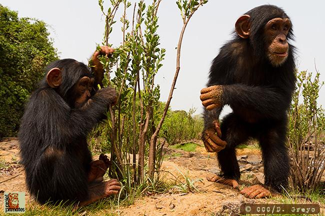 Project Primate